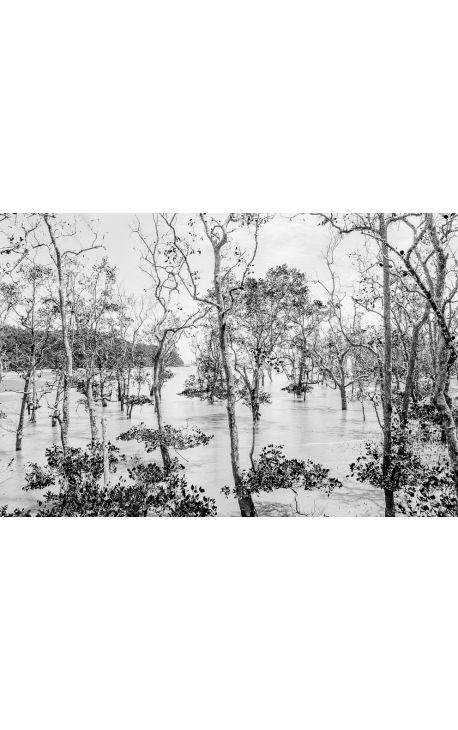 Primitive forest 08  Photo d'art Bornéo