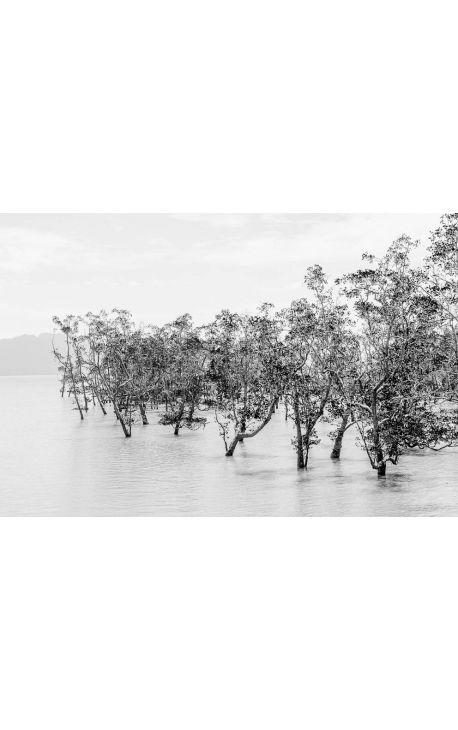 Primitive forest 07