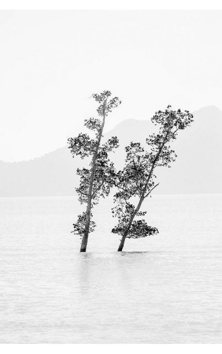 Primitive forest 11 Galerie photo d'art Nature et Paysage- Daniel Vuillemin