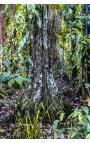 Endemic Place 10 - Photographie d'art en Papouasie