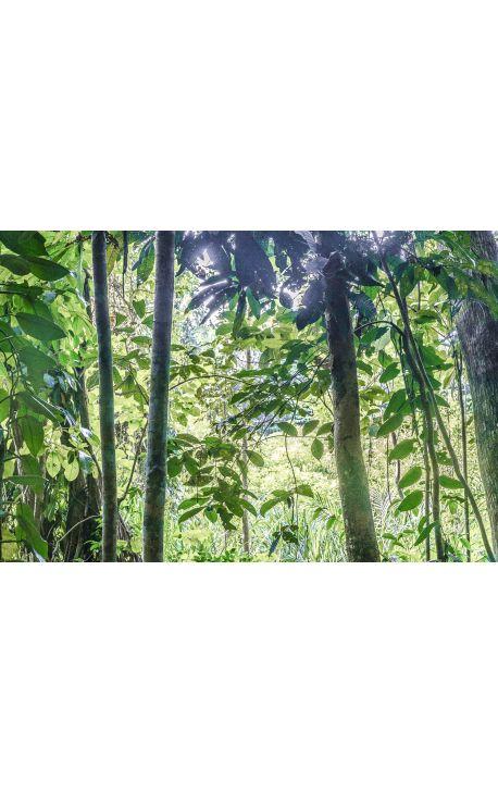 Endemic Place 18 - - Photographie d'art en Edition limitée,  Forest endémique en Papouasie