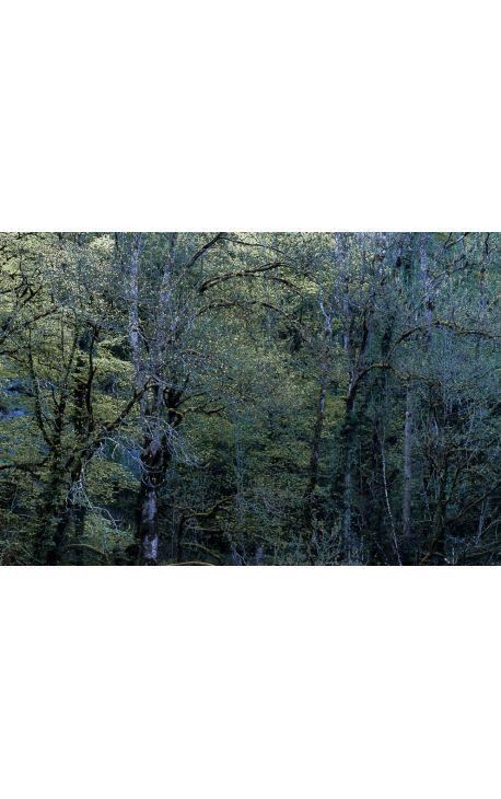 Notes de Printemps 16 - Photo d'art en édition limitée, tirage couleur grand format- Nature