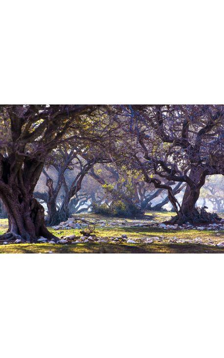 Arganier 01 - Photo d'art en édition limitée, tirage couleur grand format- Nature