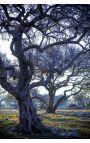 Arganier 02 - Photo d'art en édition limitée, tirage couleur grand format- Nature