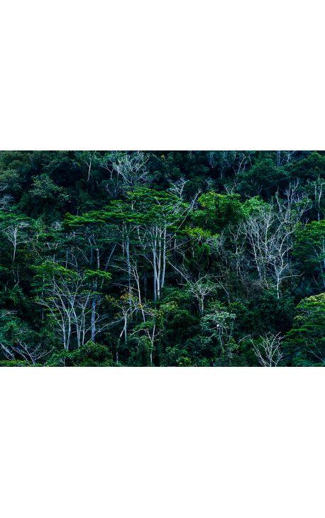 Foret CUBA 01 - Edition limitée, tirage couleur grand format- Nature