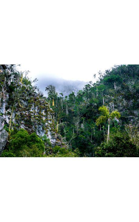 Foret CUBA 02 - Edition limitée, tirage couleur grand format- Nature