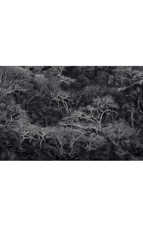 Primitive forest 02 - Photographie d'art à Madagascar