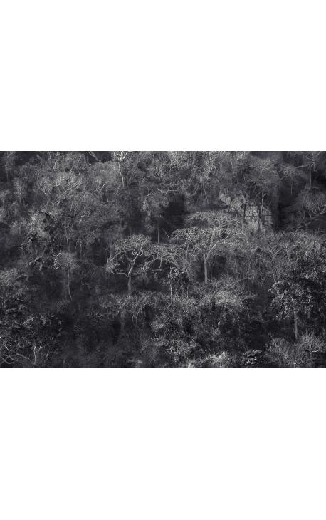 Primitive forest 01