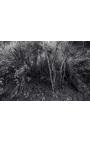 Primitive forest 04