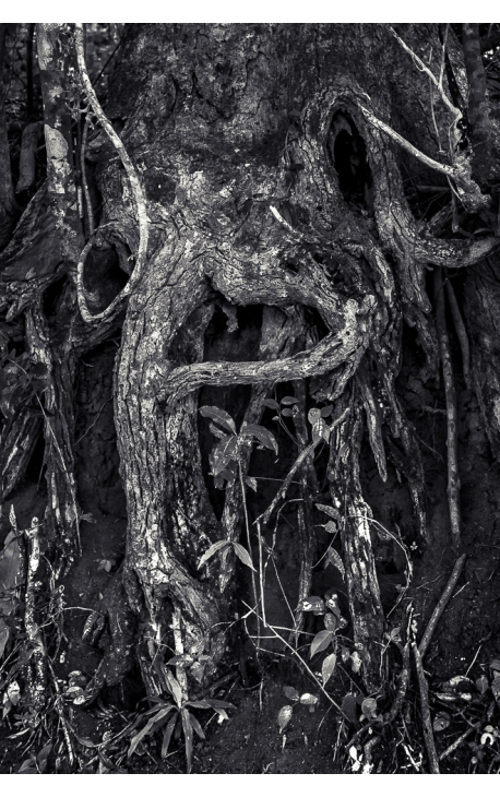 Primitive forest 05