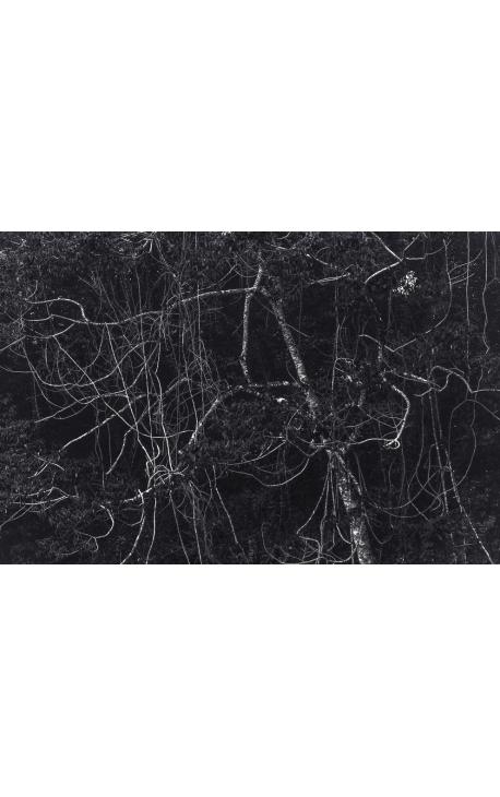 Primitive forest 06